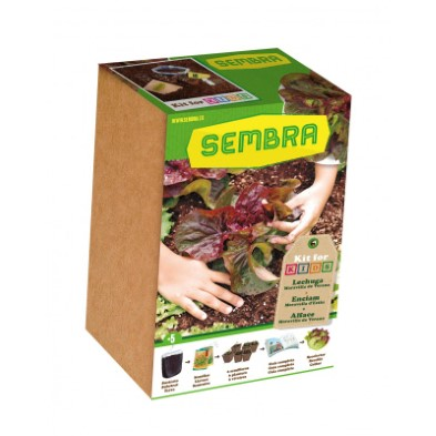 9098 Sembra My First Lettuce Growing Kit  001
