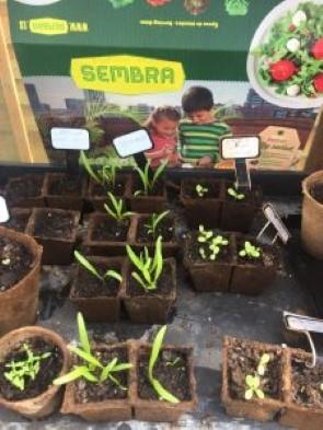 sembra fruit and vegtables gardening set